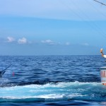 IBT60 Anamarina 3rd Best Boat fight CK4Q5766